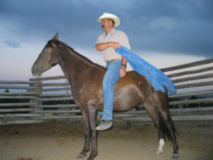 Proper communication between horse and trainer insures consistent dependability and safety .