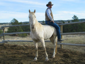 A 4 yr. old stallion after 5 weeks with Brandon.