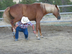 "The best ""method"" is to listen to the horse and give it what it most needs based on its personality and behavior."